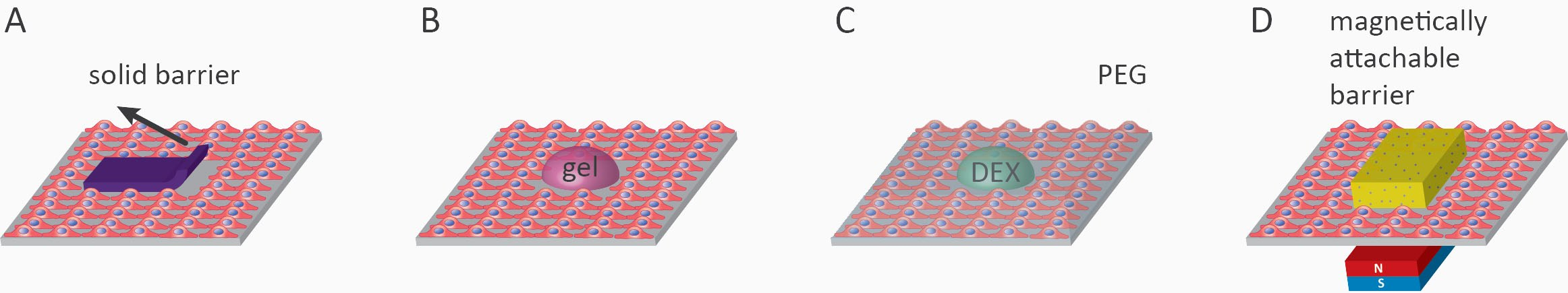 wound healing assay; Overview of cell removal assays. A) scratch wounding, B) stamp wounding, C) PDMS barrier removal, D) laser ablation, E) electroporation, F) chemical wounding in microfluidic chip and G) Vacuum based wounding.