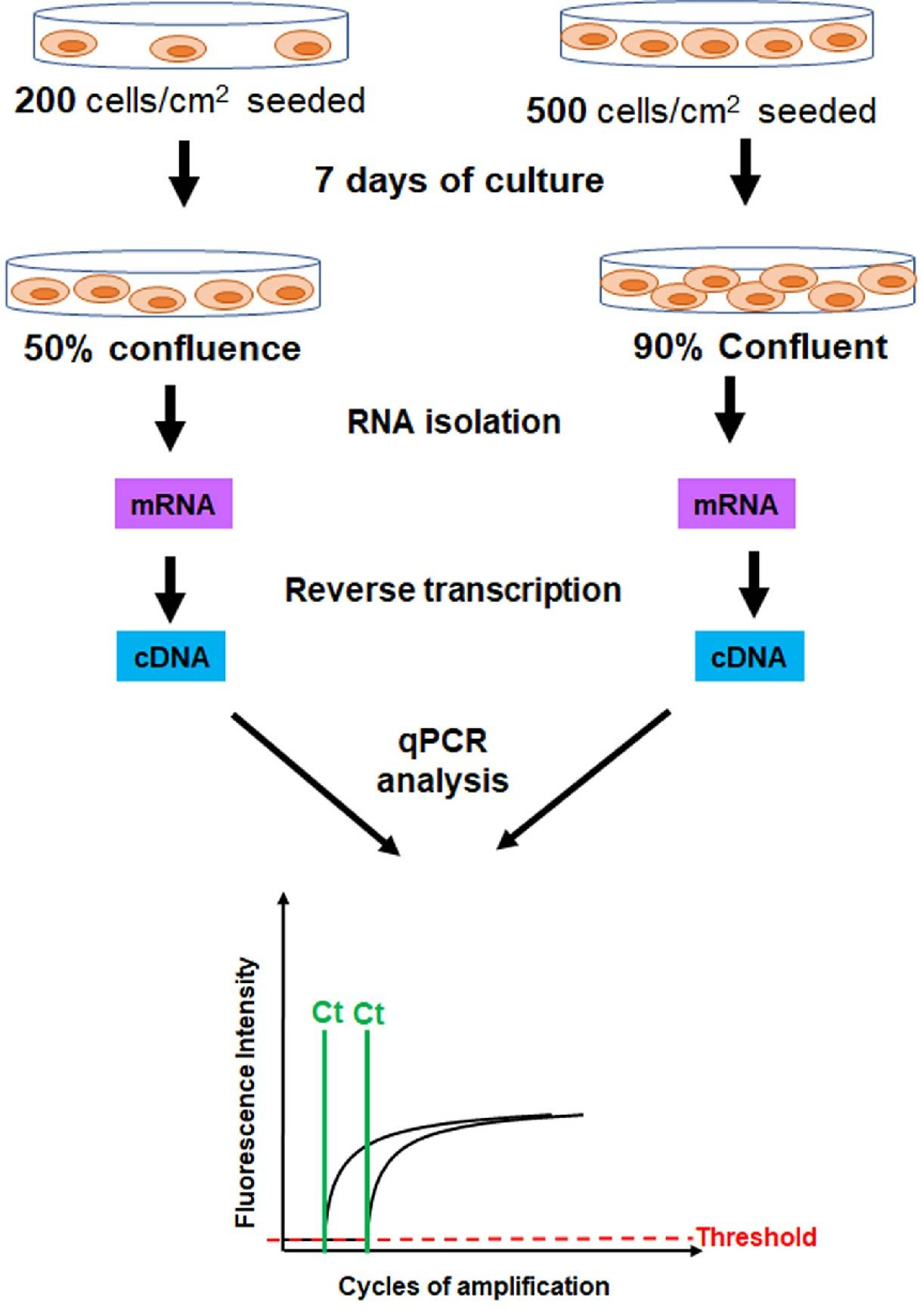 workflow qPCR analysis showing the influence of cell culture confluence levels