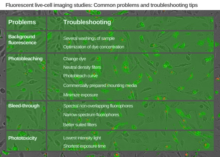 Fluorescent live-cell imaging troubleshooting tips