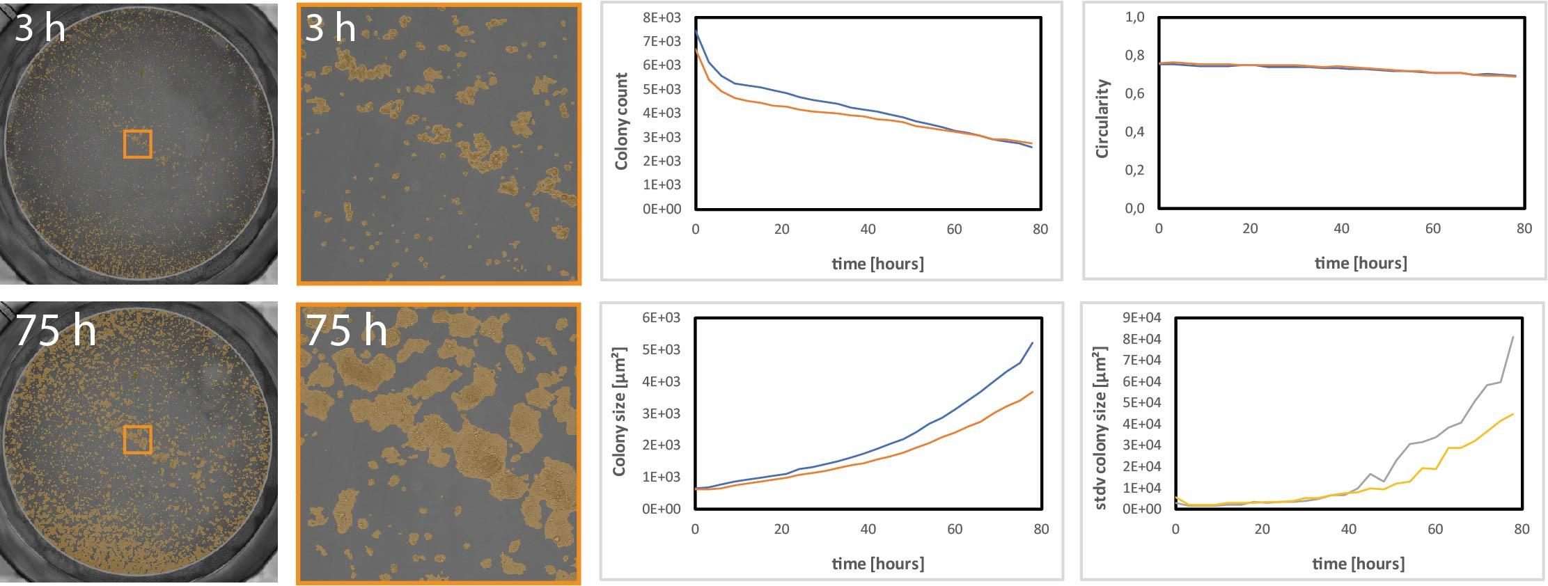 Automated colony detection using the CytoSMART Omni. Colony count, size and circularity were measured through the duration of the assay and a shown in the graphs.